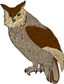 Birds of Prey Clipart image: Young Horned Owl