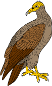 Birds of Prey Clipart image: Egyptian Vulture