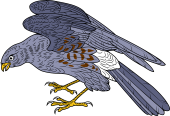 Birds of Prey Clipart image: Ash Colored Harrier