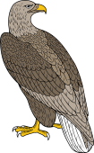 Birds of Prey Clipart image: Erne Eagle