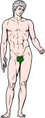 Gods and Goddesses Clipart image: Adonis
